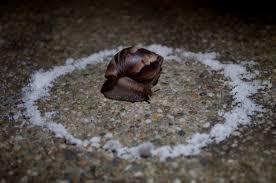 how to prevent slugs
