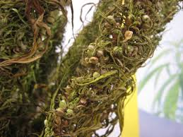 What are the benefits of hemp seed oil?