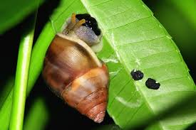 what slugs and snails do to your plants