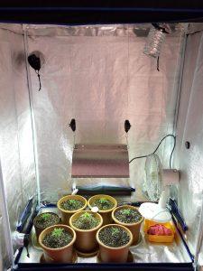 armarios de cultivo indoor