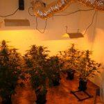 Montaje de una habitación de cultivo