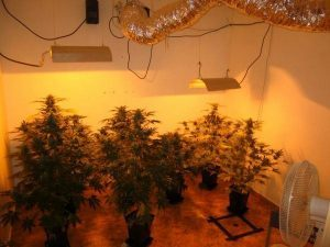 lampe cannabis