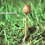 Setas y hongos alucinógenos