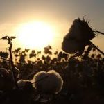 Hemp VS Cotton: an Alternative Sustainable Material