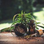 Cocinar con marihuana: los mejores consejos