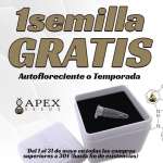 Semillas gratis de Apex Seeds