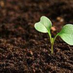 Preparar la tierra para el cultivo de cannabis en exterior