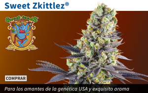 sweet zkittlez® de sweet seeds® | conocela de cerca