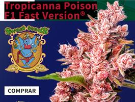 Promo Tropicana Poison