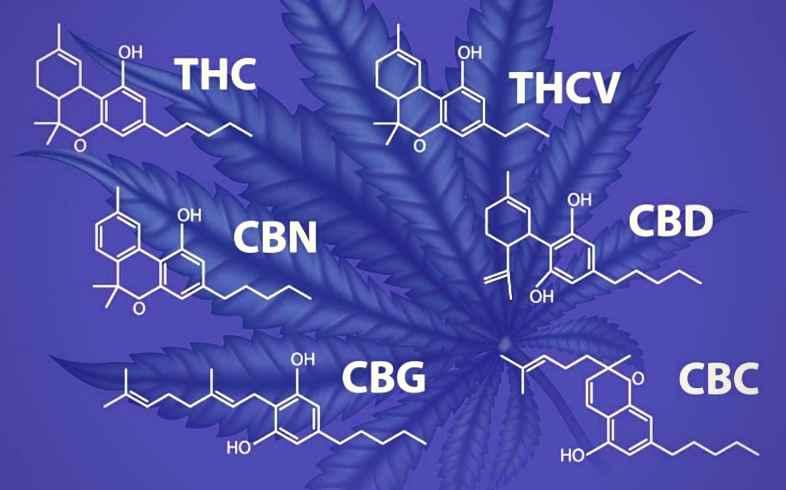 que son los cannabinoides