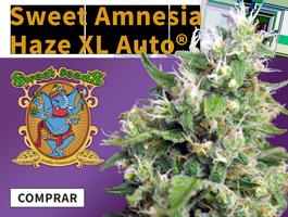Promo AmnesiaHazeXL