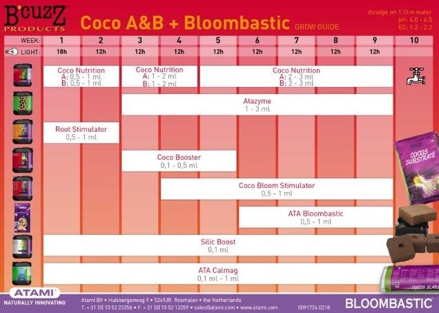 Coco A&B + Bloombastic