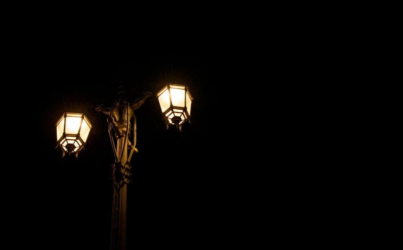 contaminación lumínica en las plantas
