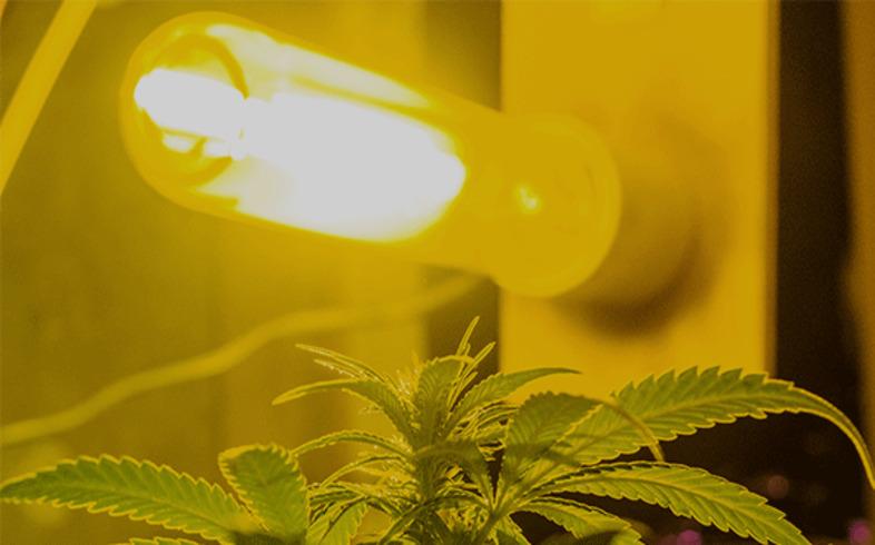 tipo bombillas cultivo cannabis