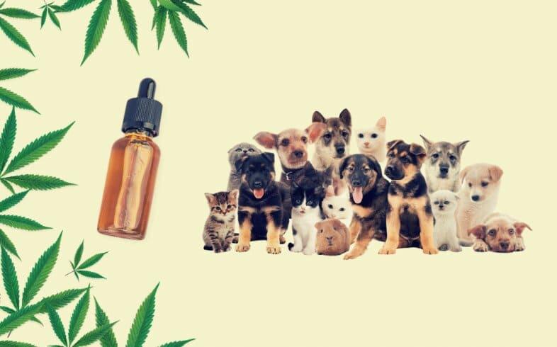 CBD para mascotas, es efectivo