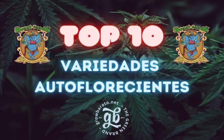 Top 10 Variedades Auto de Sweet Seeds