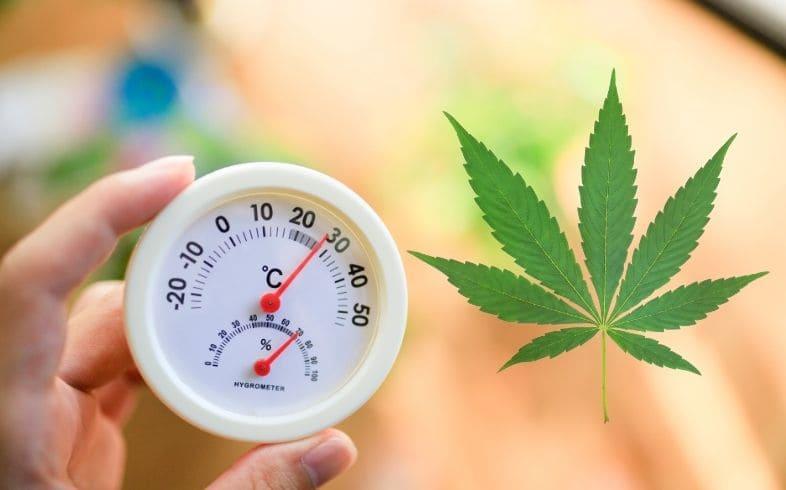 cómo cultivar marihuana en climas humedos