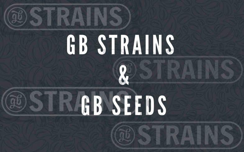 diferencias entre gb strains y gb seeds