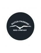 Graines féminisées de Dutch Passion