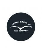 Graines régulières de Dutch Passion