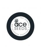 ACE Seeds variedades feminizadas de marihuana