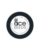 ACE Seeds Régulières