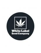Graines de cannabis régulières de White Label