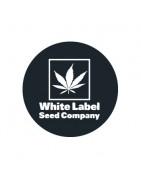 White Label Seeds Féminisées