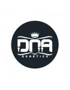 DNA Genetics Féminisées