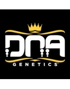 DNA Genetics feminized cannabis seeds