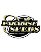 Graines automatiques de Paradise Seeds