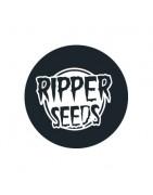 Ripper Seeds Féminisées