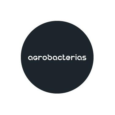 Agrobacterias