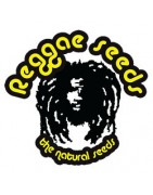 Reggae Seeds - Feminized Cannabis Seeds
