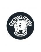 Graines de cannabis Reggae Seeds régulières