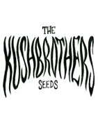 The Kush Brothers Seeds Féminisées