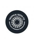 Graines féminisées de Tropical Seeds