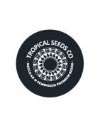 Tropical Seeds Co. Régulières