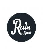 Graines de cannabis féminisées de Resin Seeds