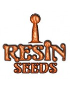 Resin seeds - feminized cannabis seeds