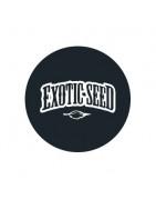 Graines de cannabis régulières Exotic Seeds