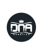 DNA Genetics Régulières