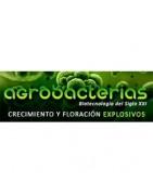 Agrobacterias. Biotecnología para el cannabis