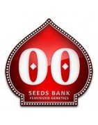 00 Seeds Spécialistes en indica pour le hasch