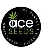 Productos ACE Seeds