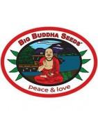 Productos Big Buddha Seeds