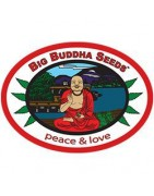 Big Buddha Seeds. Les créateurs de la Cheese