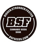BSF Seeds Full Catalogue
