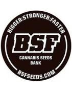 BSF Seeds. Grand catalogue de graines