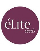 Élite Seeds. Graines de marijuana de qualité
